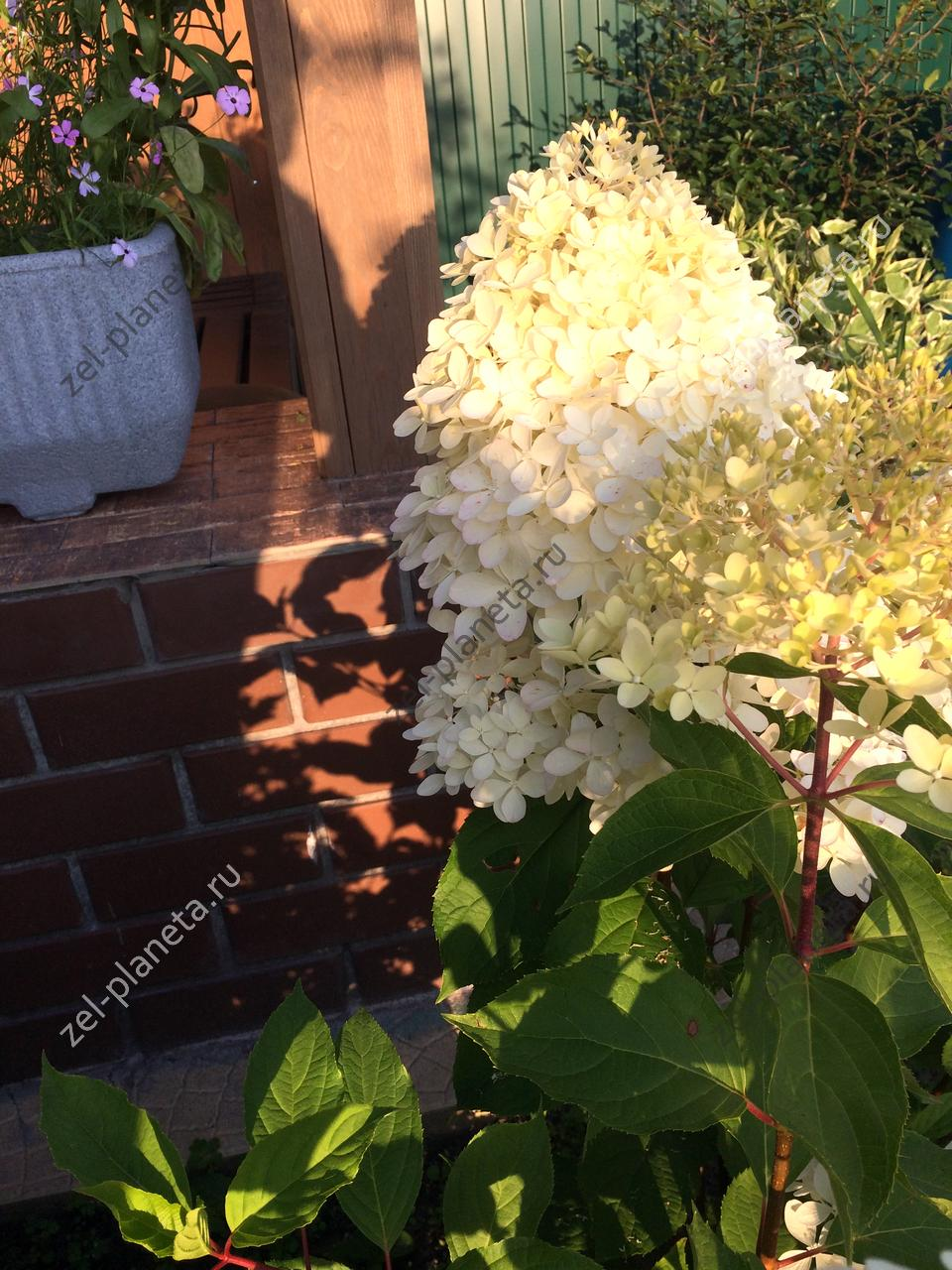 Малый сад на 6 сотках