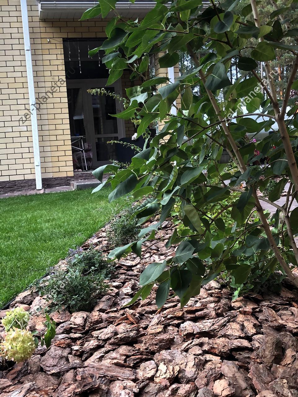 Сад в сосновом бору